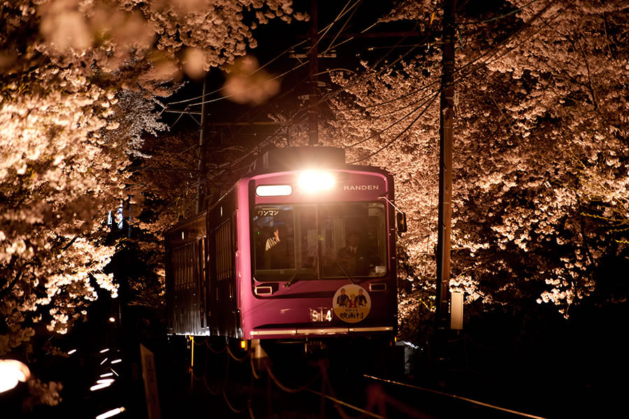 Night Sakura Train in Kyoto Prefecture