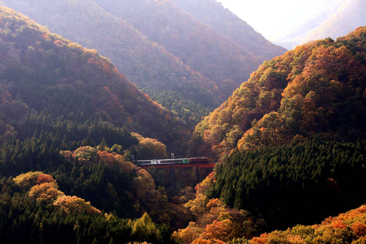 JR Senzan Line Train in the Mountains of Japanese Maple Tree